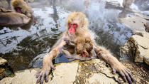 Visiting the Nagano Snow Monkeys