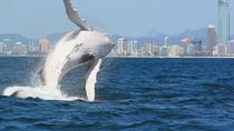 Whale Watching in Brisbane, the Gold Coast and Hervey Bay