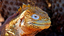 3 Days in the Galapagos Islands: Suggested Itineraries