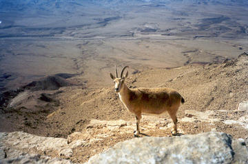 The Mighty Makhtesh Ramon