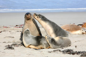 Seal Bay Conservation Park , South Australia