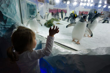 Kelly Tarltons SEA LIFE Aquarium Tours, Trips & Tickets - Auckland ...