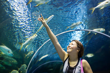 Best Family Friendly Attractions