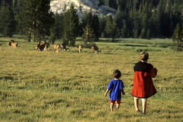 Yosemite Wildlife Viewing Tips