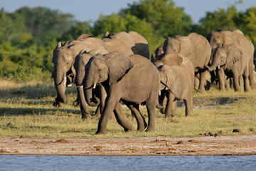 Top National Parks of Zimbabwe