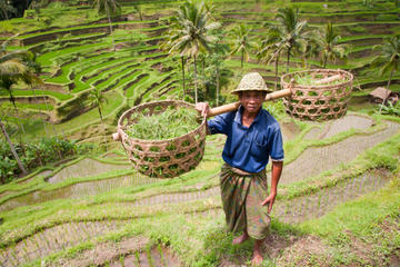 Exploring the Rice Paddies of Bali