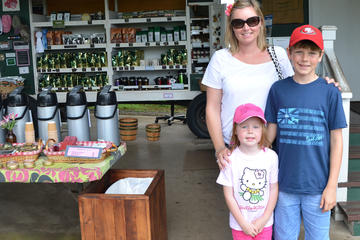 Kona Coffee Tours: Best Farms and Itineraries