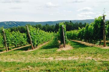 Saint-Famille Wines , Nova Scotia
