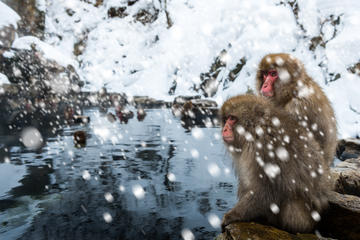 Jigokudani Monkey Park, Japan
