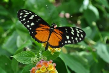 Victoria Butterfly Gardens Tours Trips Tickets