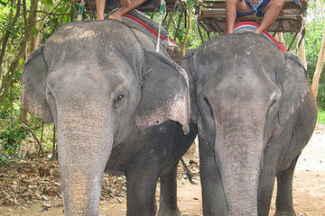 Pattaya Elephant Village