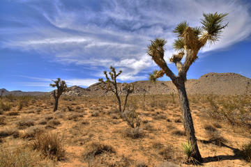 Palm Springs Suggested Itineraries