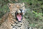 Full Day Leopard Safari Tour in Yala National Park by Malith & Team