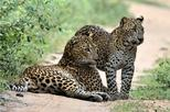 Special Leopard Safari Tour in Yala National Park by Malith & the team