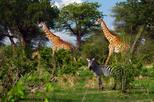 1-Day Ruaha National Park