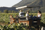 Wine & Horse Carriage Tour: Loma Larga and Emiliana Vineyards and Tastings