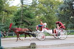 New York City Horse-Drawn Carriage Rides