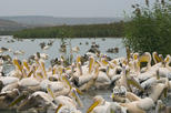 Birds, nature and wine tour from Nessebar or Bourgas
