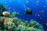 Catalina Island - Scuba Diving - Snorkelig by Firelys Tour SRL