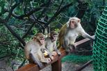 One Day Private Tour of Monkey Island and Nantian Hot Spring