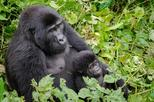 3 Days Bwindi Impenetrable Gorilla National Game Park Tour