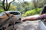 Back to Nature at Puncak Safari Park Tour with Lunch