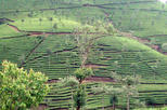 1 Day - COFFEE TOUR IN NEPAL