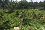 Private Ubud Tour -Rice Terrace-Swing-Coffee Plantation-Waterfall-Kecak Dance -