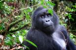 3 Day Gorilla tracking tour