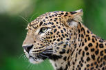 Full day Game Drive at Wilpattu National Park