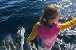 Among Dolphins and Whales Eco-Tour