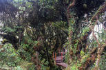 Cameron Highlands: Mossy Forest Discovery
