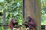 Full-Day Sepilok Orangutan and Sun Bear and Sandakan City Trail