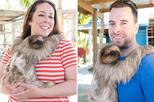 Monkeys and Sloth Hang Out with Island Tour in Roatan