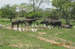 Travel to the unexplored Kafue, National Park in Zambia, Africa