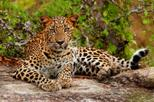 Yala National Park Adventure from Galle