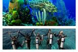 Scuba Diving Tour in Cham Island for certified divers or Beginners