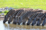 2-Nights 5-star Sanbona Game Reserve with private transfers to and from Sanbona