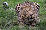 Private tour wild life safari from cape town in cape town 248146
