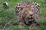 Wild Life Safari Tour including Private Transfer To and From Aquila Reserve