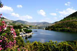 Douro valley small group tour with wine tasting portuguese lunch and in porto 155754