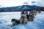 Dog sledding & Chinggis Khaan Statue tour
