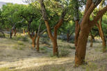 Alentejo Cork Forest and Cork Farm with Lunch