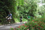 Original Blue Mountain Bicycle Tour from Falmouth
