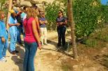 Wine Tour and Tasting in a Vinho Verde Estate from Porto