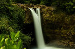 The Best Waterfall Sites and Hawaii Tropical Botanical Gardens Small Group Tour