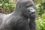 3 DAYS 2 NIGHTS GORILLA AND GOLDEN MONKEY TREKKING IN RWANDA