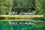 Lipizzaner Horseback Ride Tour from Bled