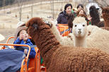 Alpaca World & Snow Scenic Gondola Ride One day Tour