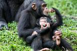 5-Day Queen Elizabeth & Kibale Forest Chimp trek